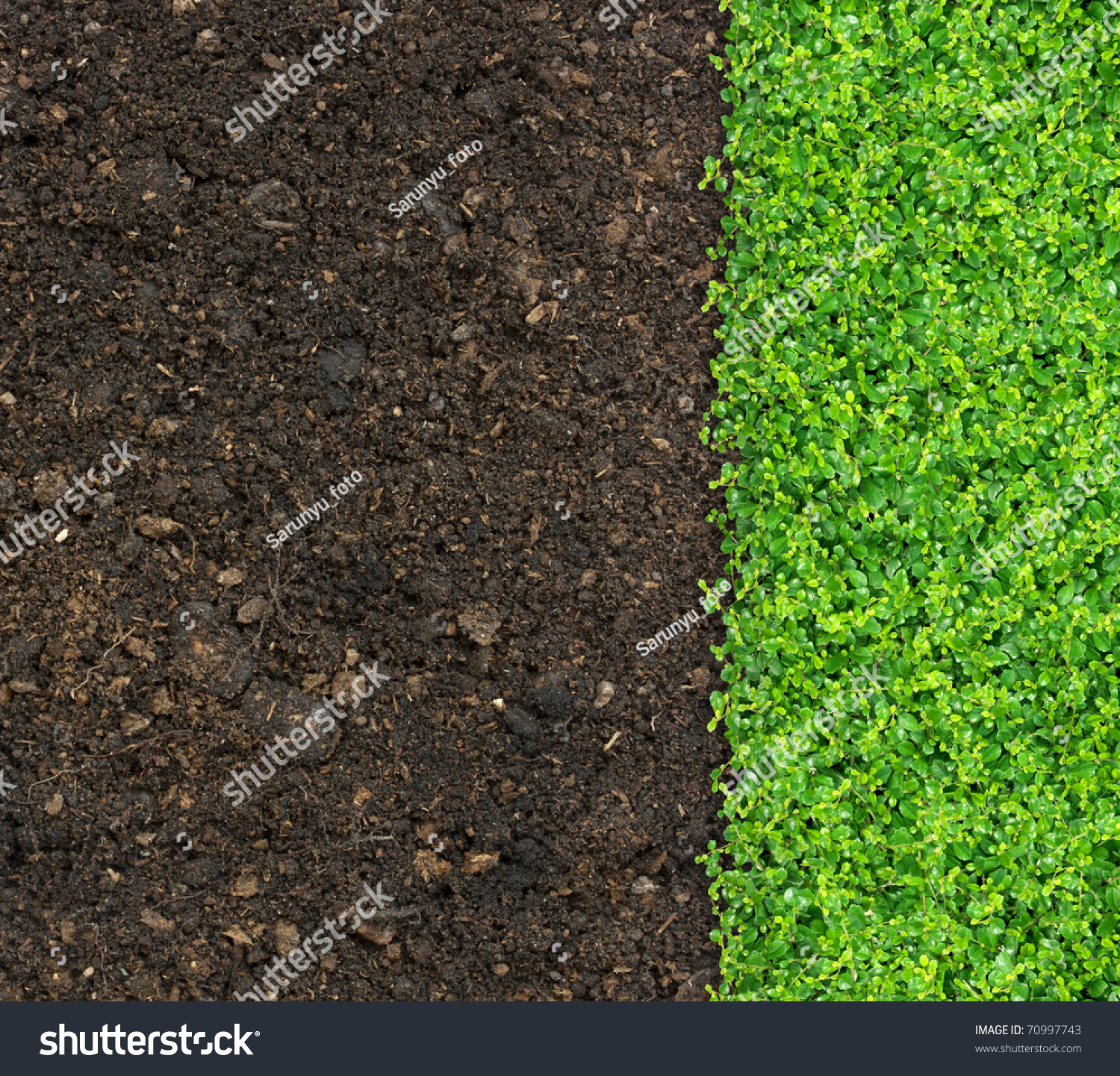 Grass and green plants growing on soil manure stock photo for Soil and green