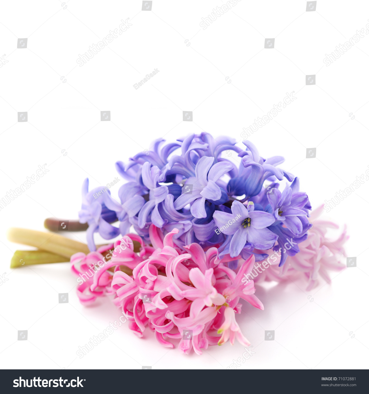 Bouquet violet hyacinth isolated on white background stock photo save to a lightbox dhlflorist Choice Image