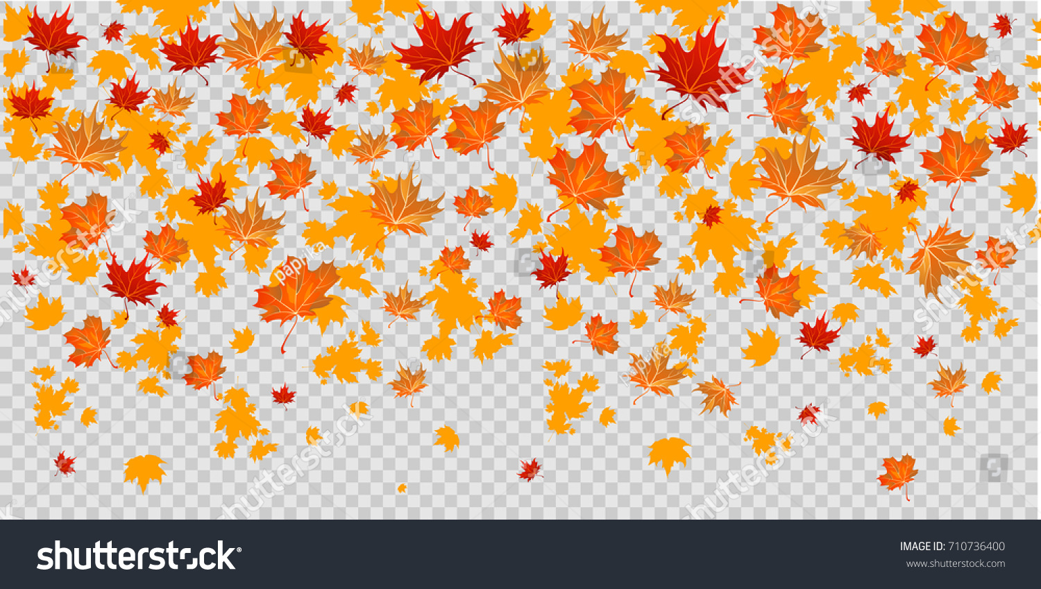 Autumn leaves design elements. Maple fall leaves on transparent background.