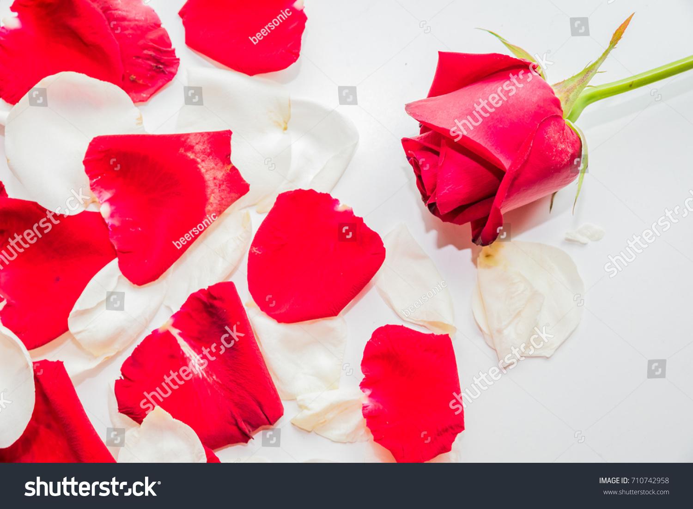 Red rose symbol valentine symbol love stock photo 710742958 red rose symbol of valentine symbol of love buycottarizona