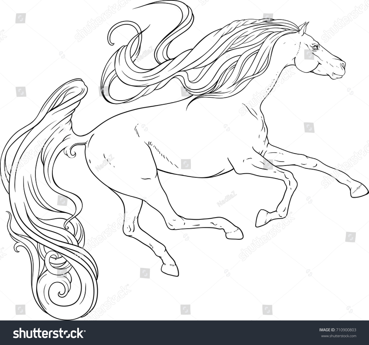 Running Horse Curly Tail Mane Coloring Stock Vector 710900803 ...
