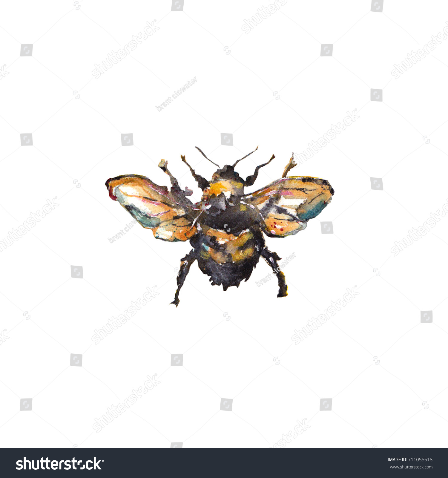 Bumble Bee Watercolor High Resolution Raster