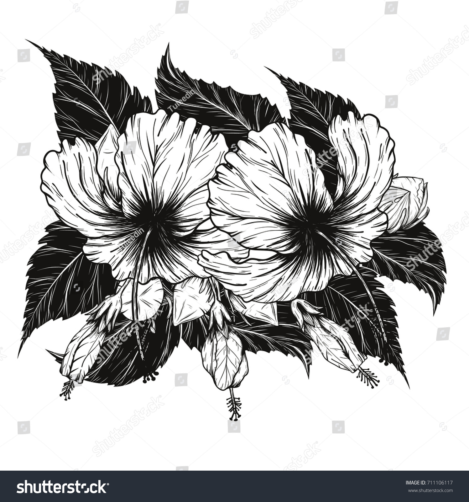 Hibiscus Flower Vector By Hand Drawingflower Set On White