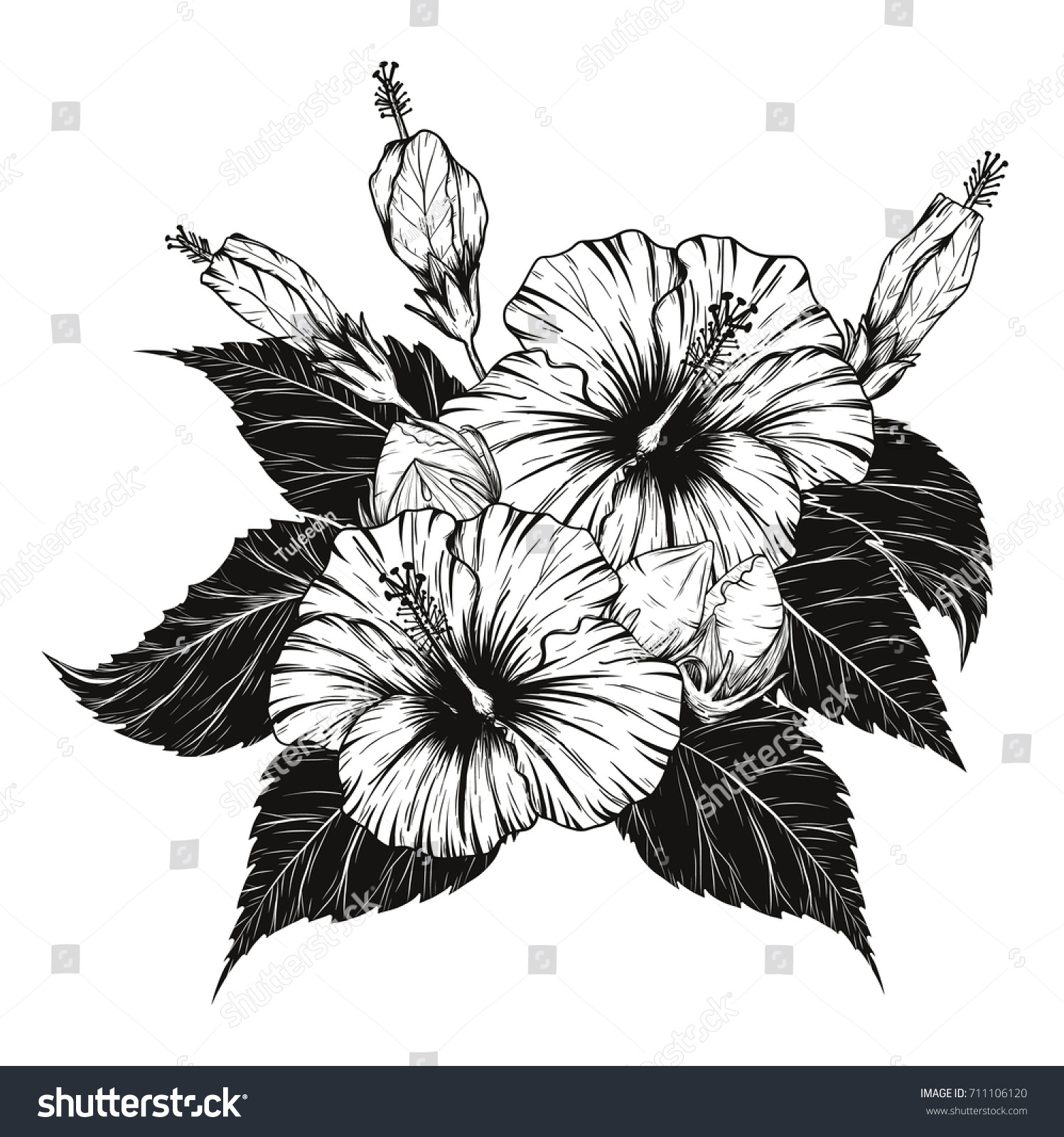Hibiscus Flower Vector By Hand Drawing Flower Stock Vector Royalty