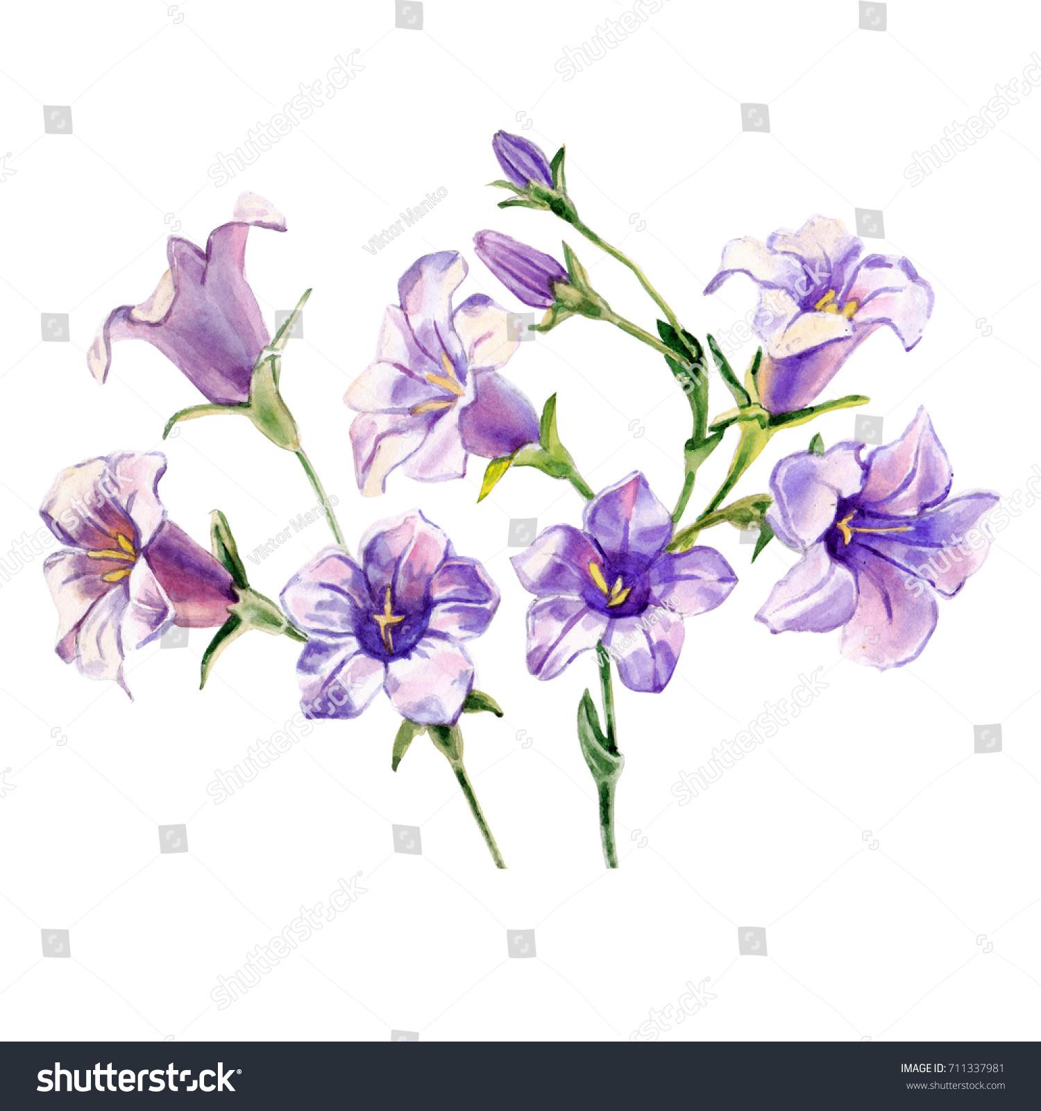 Watercolor Blue Bells Flowers On White Stock Illustration 711337981