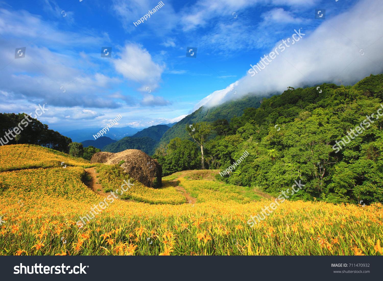 Beautiful scenery daylily flowers blooming among stock photo edit beautiful scenery of daylily flowers blooming among the mountains with path in a sunny day izmirmasajfo