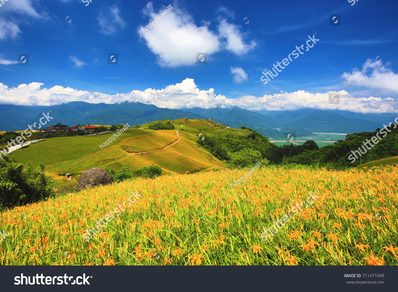 Beautiful scenery daylily flowers mountains sunny stock photo edit beautiful scenery of daylily flowers with mountains in a sunny day izmirmasajfo