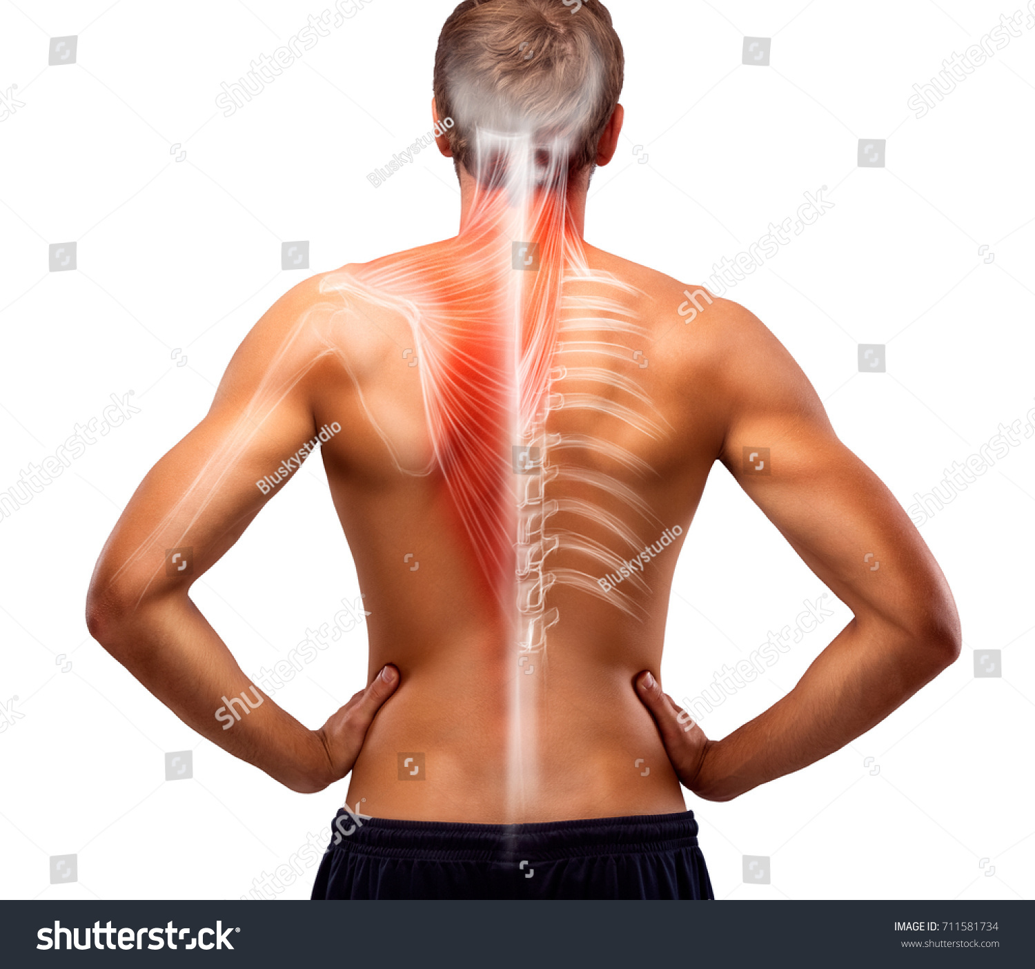 Mans Back Bones Illustration Stock Photo Edit Now 711581734