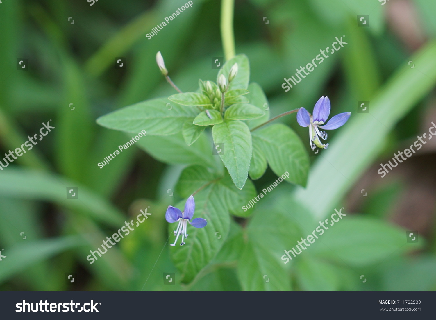 Small blue flowers on the tree in the garden ez canvas id 711722530 izmirmasajfo