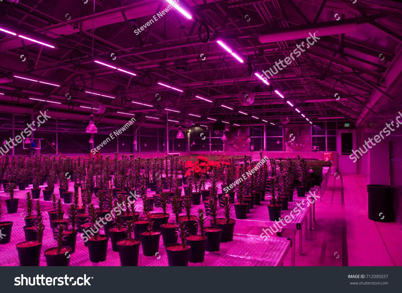 Greenhouse interior led light fixtures stock photo 712095037 greenhouse interior led light fixtures stock photo 712095037 shutterstock arubaitofo Gallery