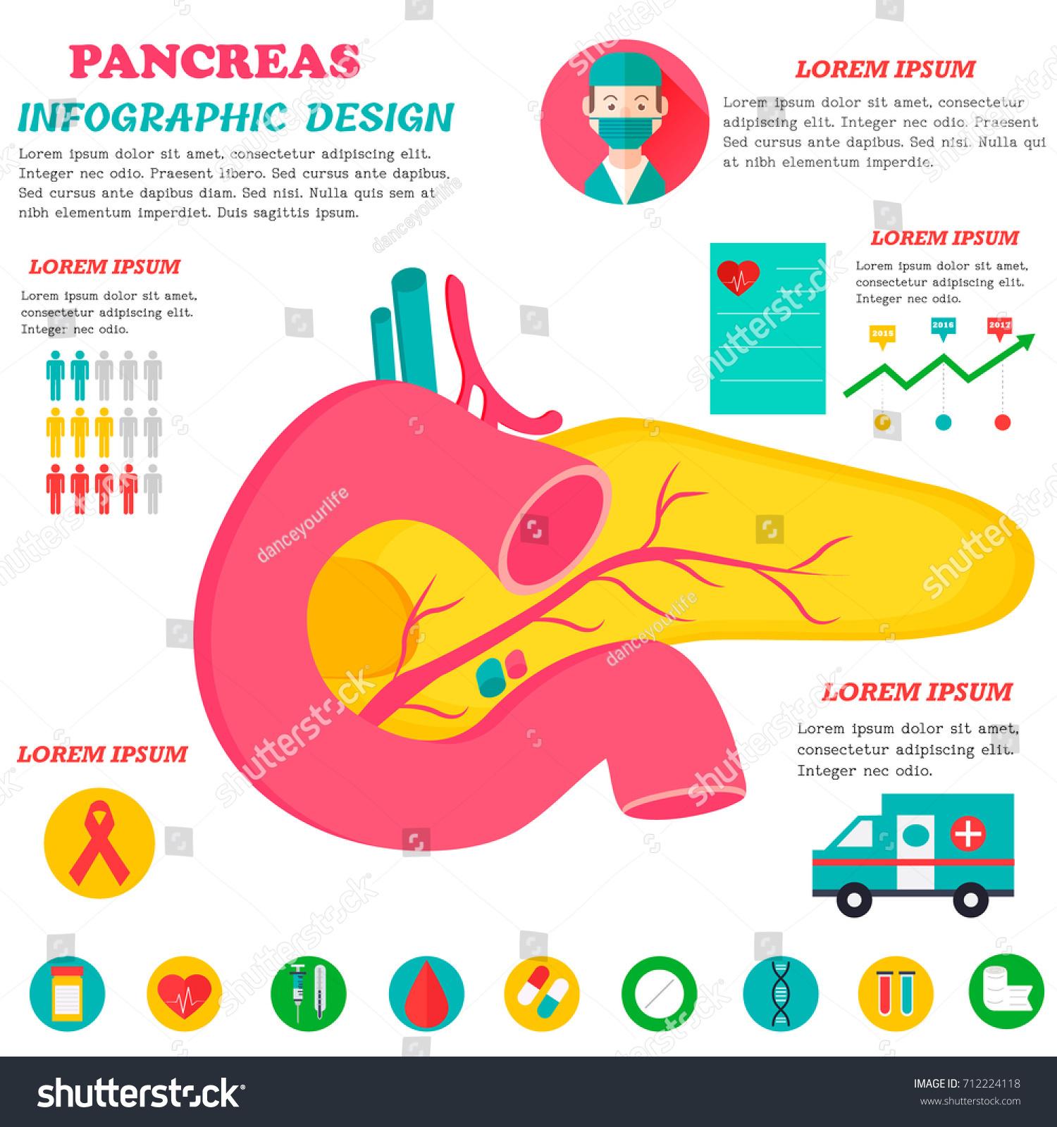 Infographic Poster Pancreas Illustration Vector de stock (libre de ...