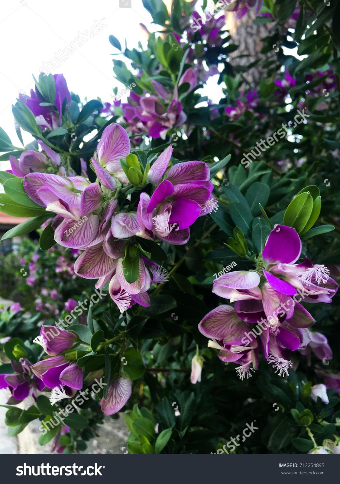 Nice Small Purple Flowers Bush Ez Canvas