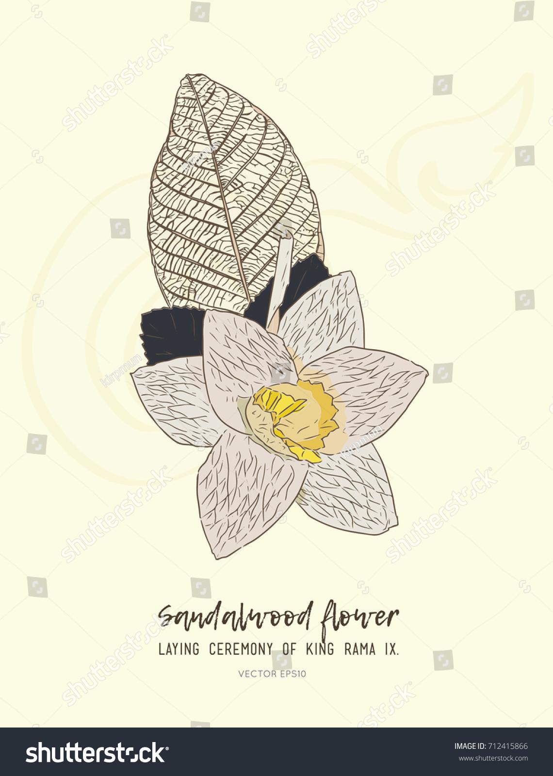 Thai artificial funeral daffodil flower dok stock vector hd royalty thai artificial funeral daffodil flower or dok mai chan sandalwood flower laying ceremony for izmirmasajfo