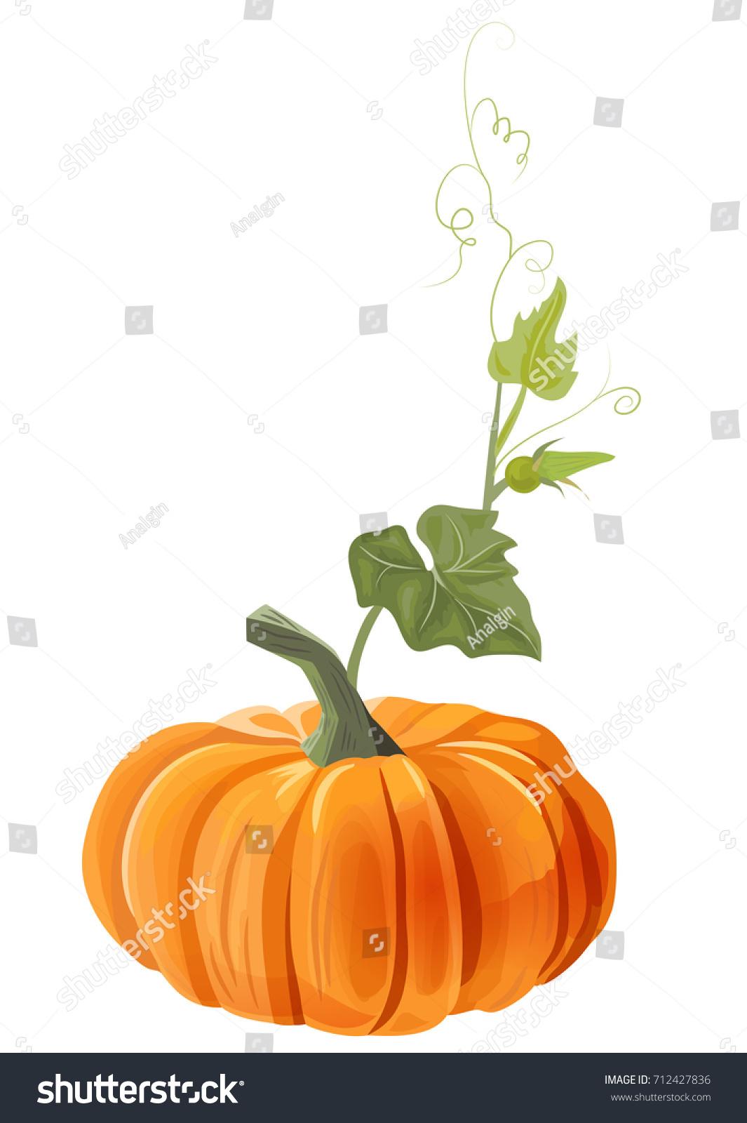 Orange Pumpkin Leaves Bud Stem Antennae Stock Vector Royalty Free 712427836