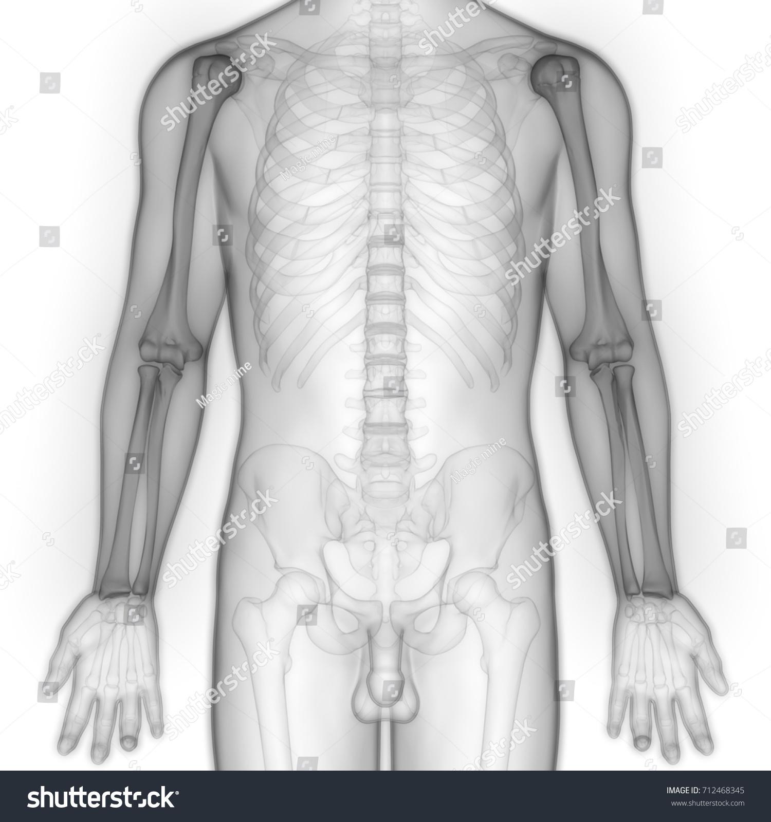 Human Body Bone Joint Pains Anatomy Stock Illustration 712468345