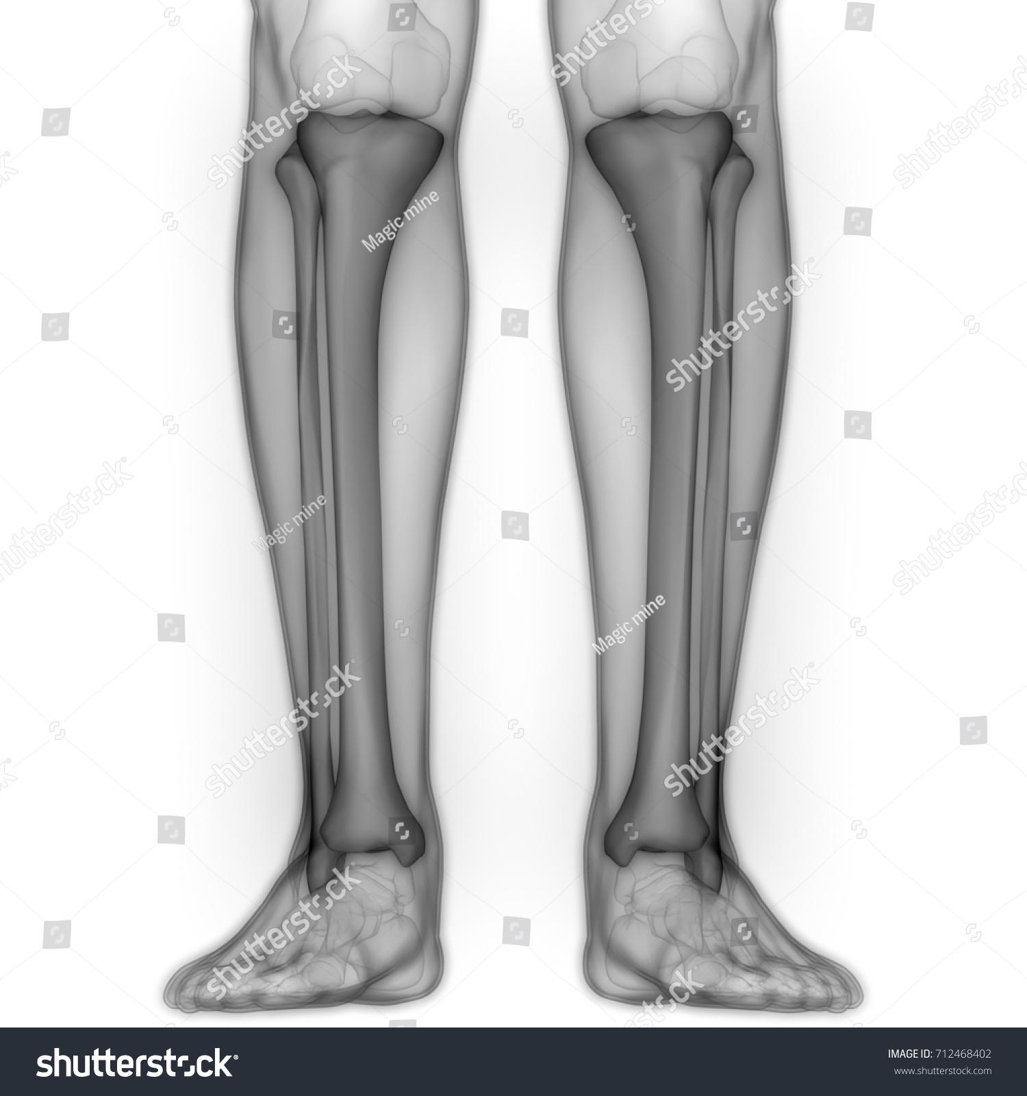 Human Body Bone Joint Pains Anatomy Stock Illustration 712468402