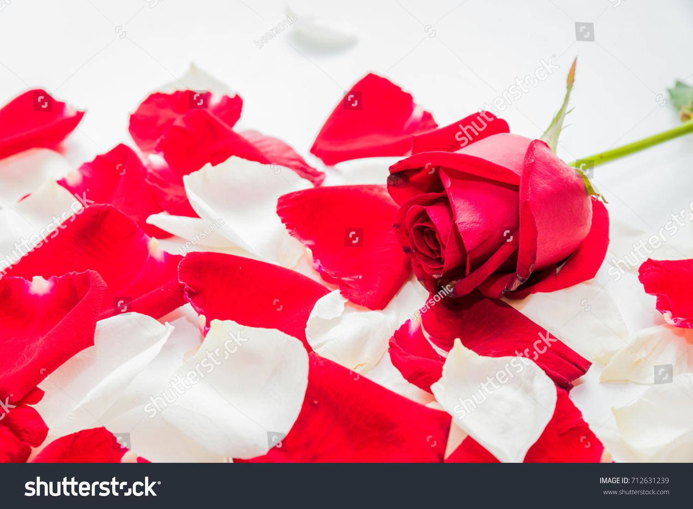 Red rose symbol valentine symbol love stock photo 712631239 red rose symbol of valentine symbol of love buycottarizona