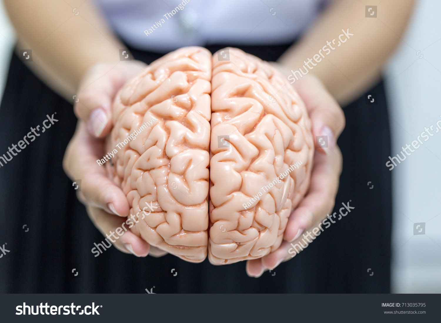 Human Brain Model Education Laboratory Stock Photo Safe To Use