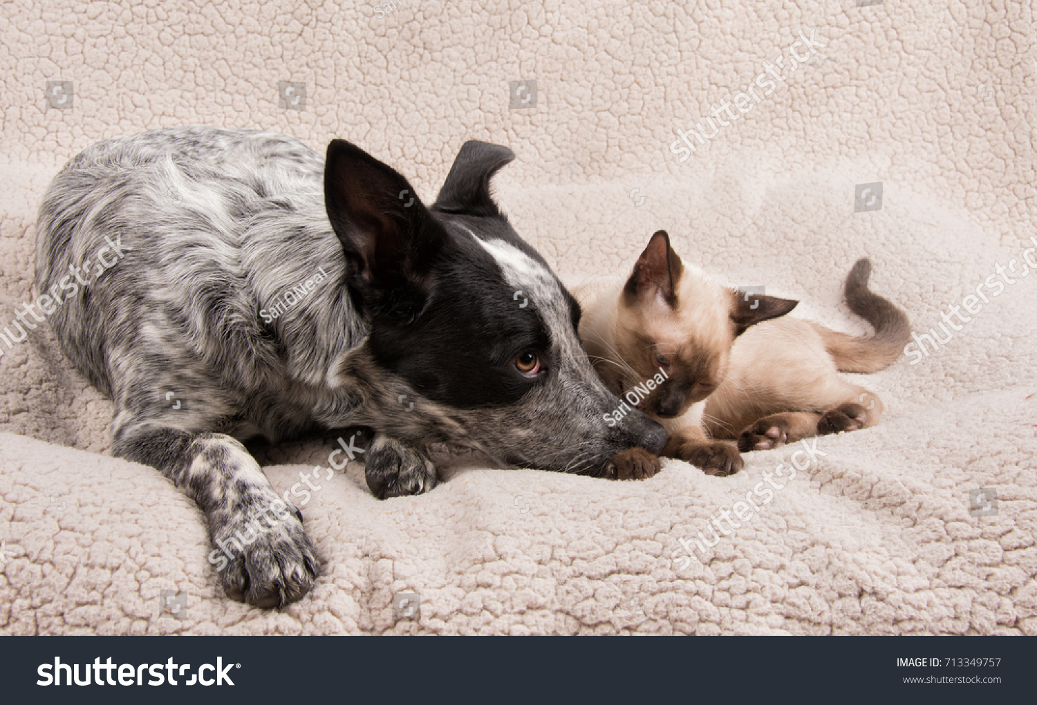 stock-photo-tender-moment-between-a-youn