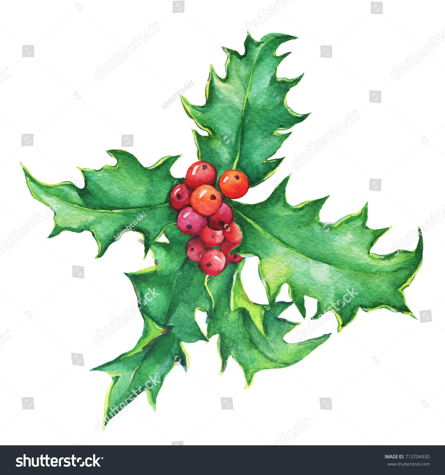 Why is holly a traditional christmas decoration - Holly Ilex Holiday Traditional Christmas Decoration For Greeting Card Invitation