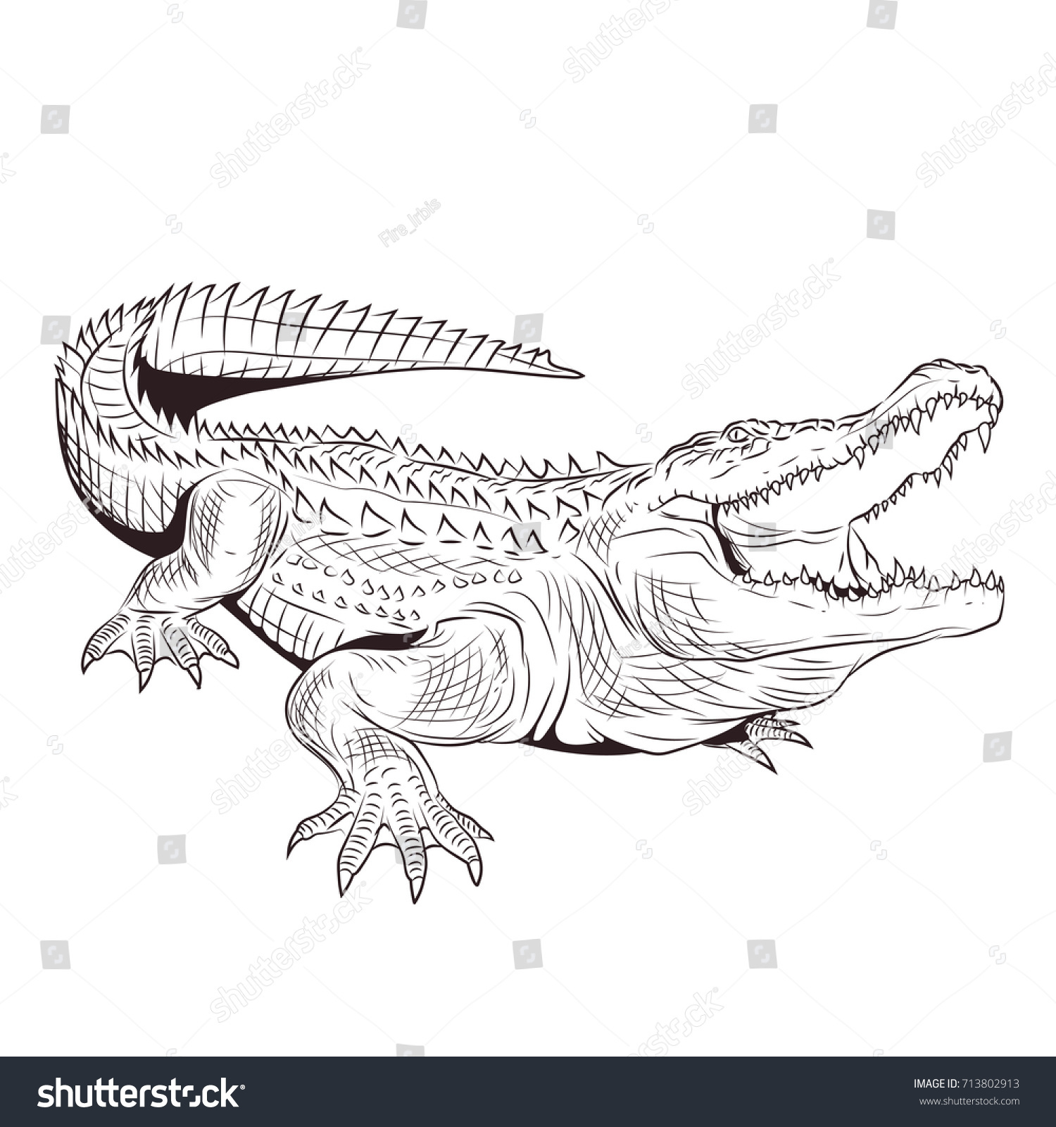 Crocodile Open Mouth Adult Coloring Page Stock Vector 713802913 ...