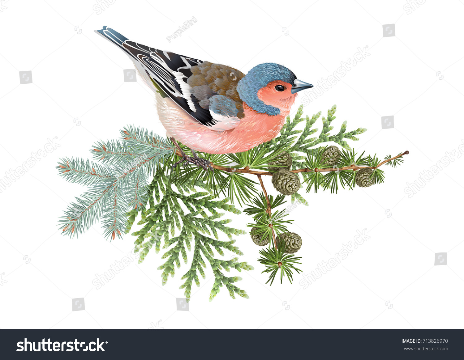Vector realistic composition finch bird on stock vector 713826970 vector realistic composition with finch bird on conifer branches isolated on white background winter design biocorpaavc
