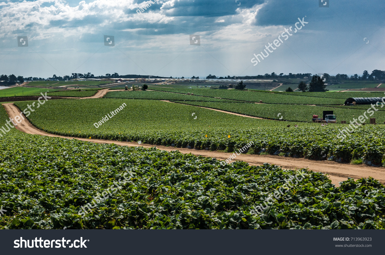 A field of strawberry crops growing in central California, as a storm approaches.  California grows more than 2 billion pounds of strawberries per year.