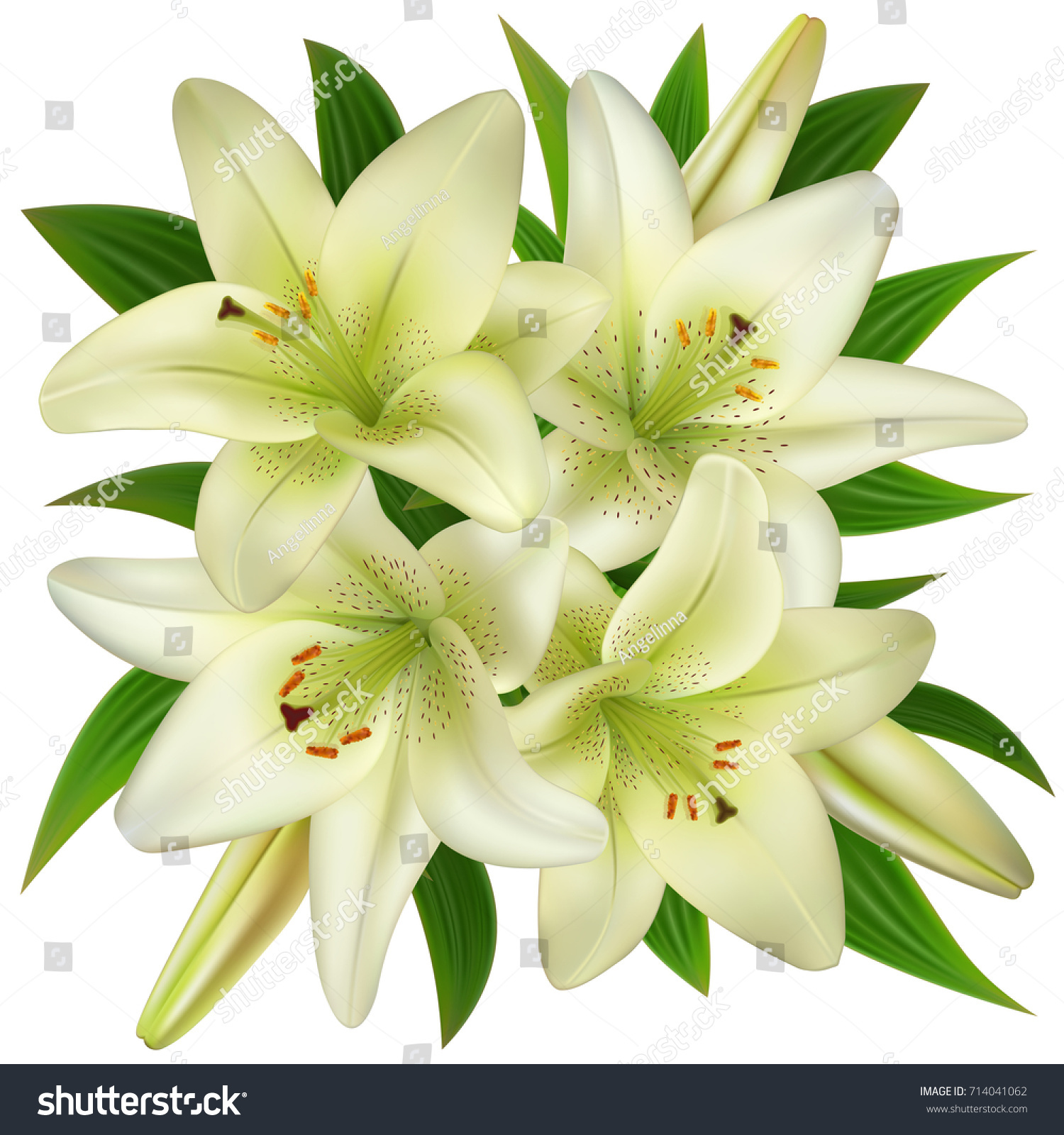 Illustration bouquet white lily flowers isolated stock vector illustration of bouquet from white lily flowers isolated izmirmasajfo