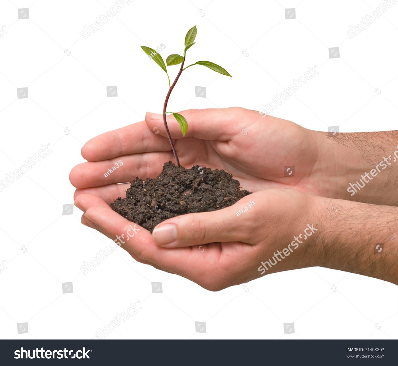 Avocado tree seedling hands symbol nature stock photo 71408803 avocado tree seedling in hands as a symbol of nature protection biocorpaavc