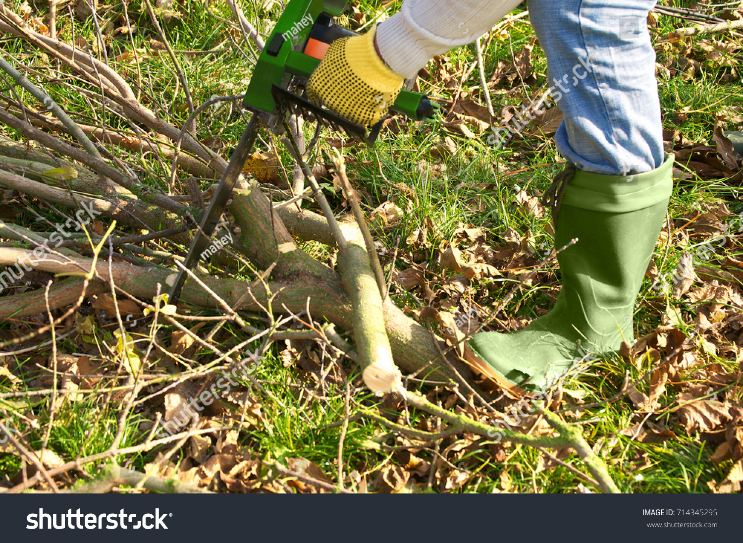 Sawing Branches Chainsaw Garden Works Tree Stock Photo (Edit Now ...