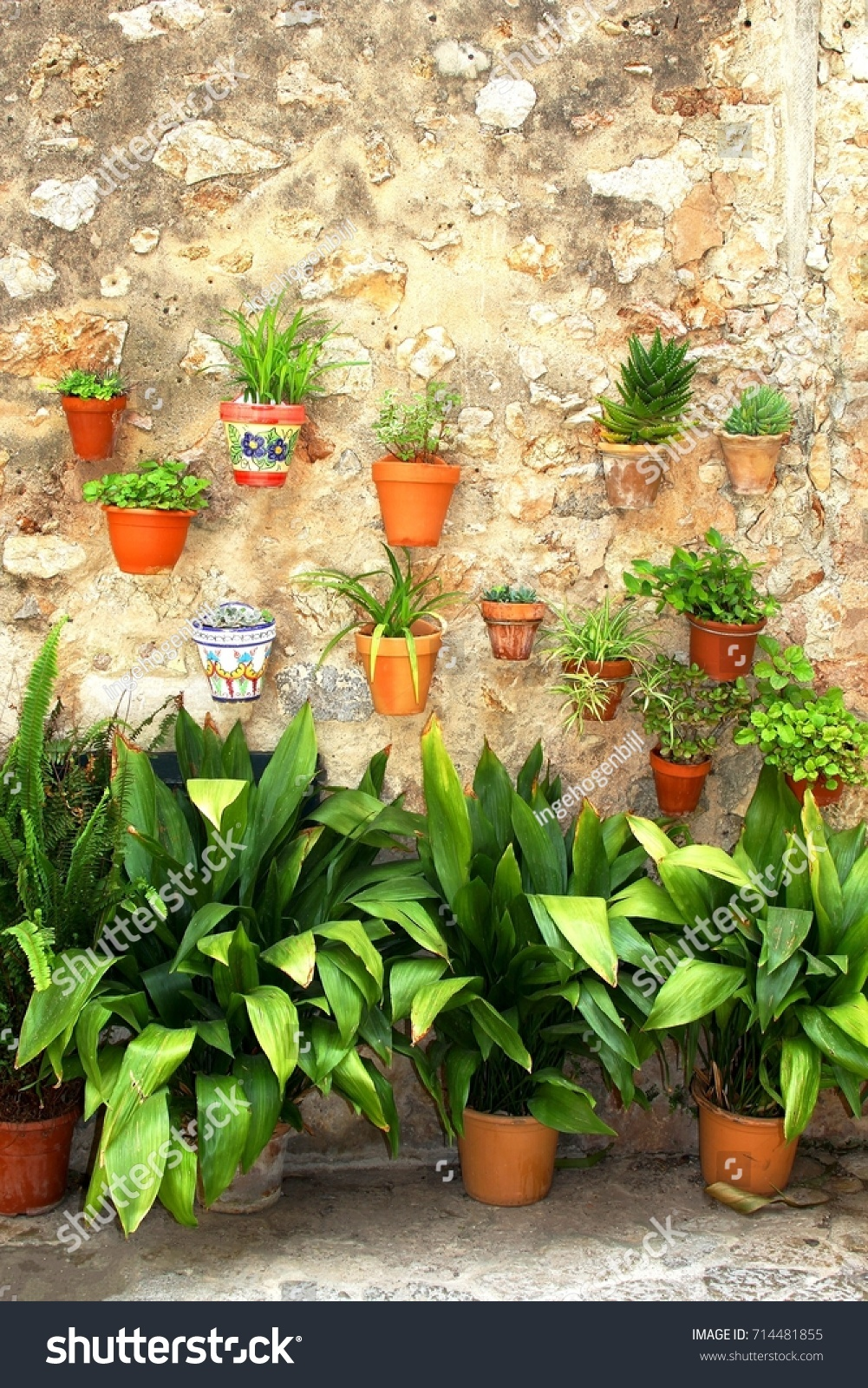Rustic wall with terra cotta flower pots and plants in outdoor garden Fornalutx Majorca Spain - Image & Rustic Wall Terra Cotta Flower Pots Stock Photo (Edit Now) 714481855 ...