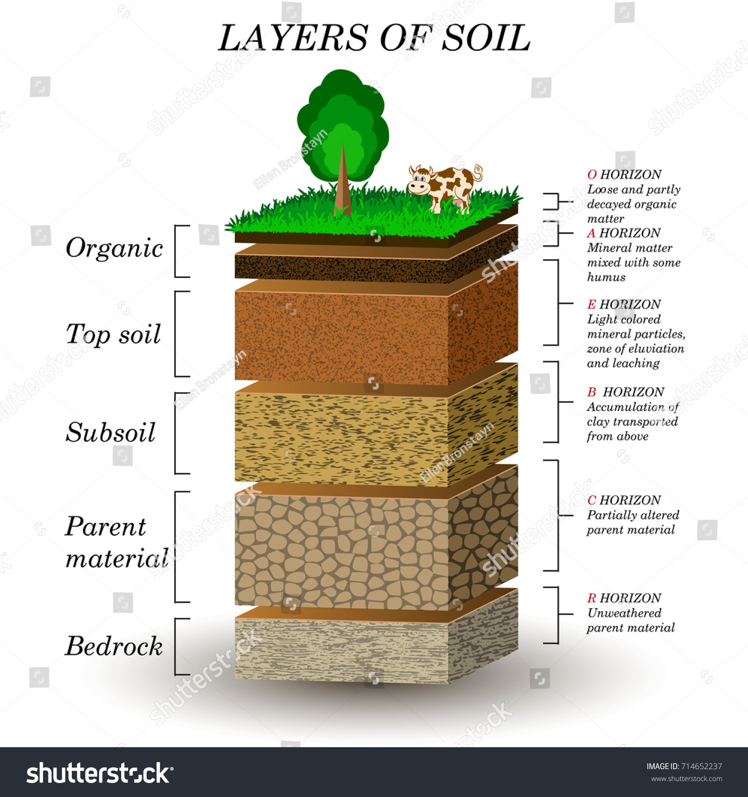 Layers soil education diagram mineral particles stock for What are the different layers of soil