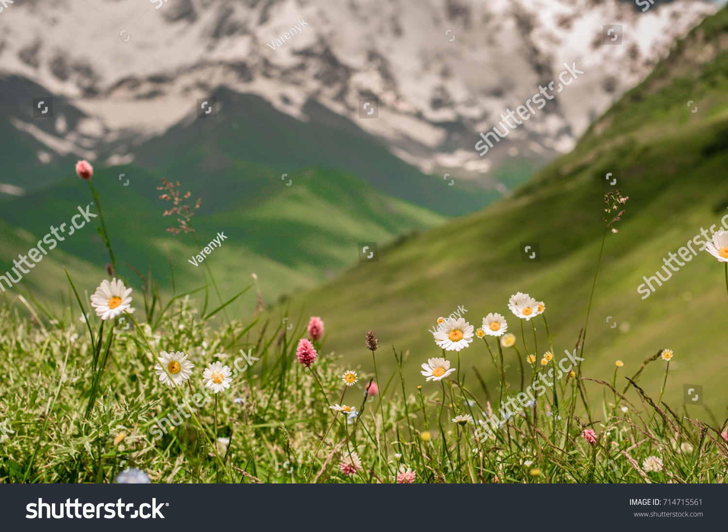 Beautiful Mountain Flowers Background High Mountains Stock Photo