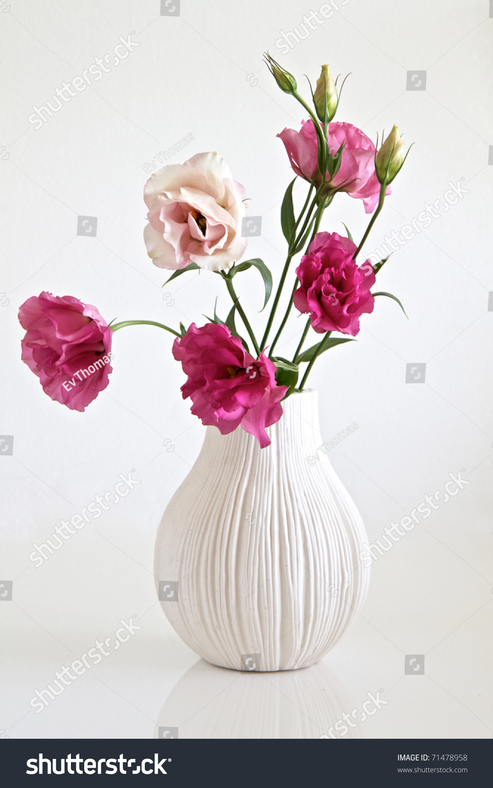Pink Flowers Vase Stock Photo Edit Now 71478958 Shutterstock