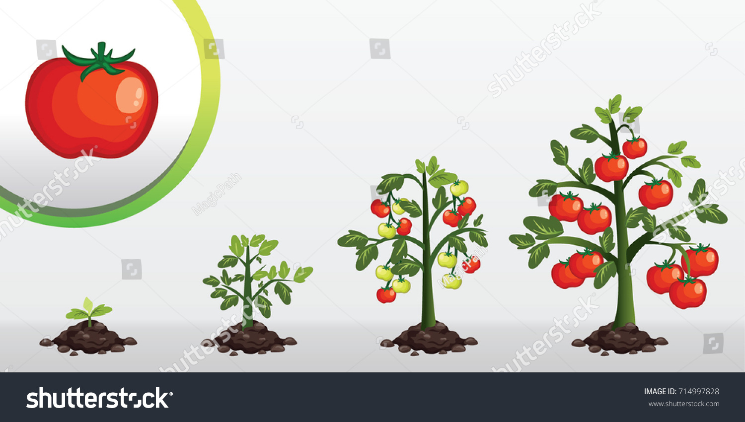 Infographic Tree Planting Seedling Plant Seeds Stock ...