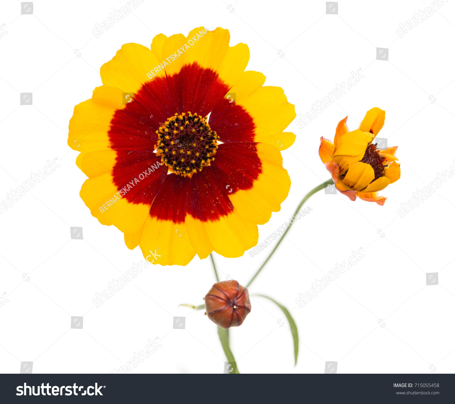 Yellow Flower Red Center Stock Photo Edit Now 715055458 Shutterstock