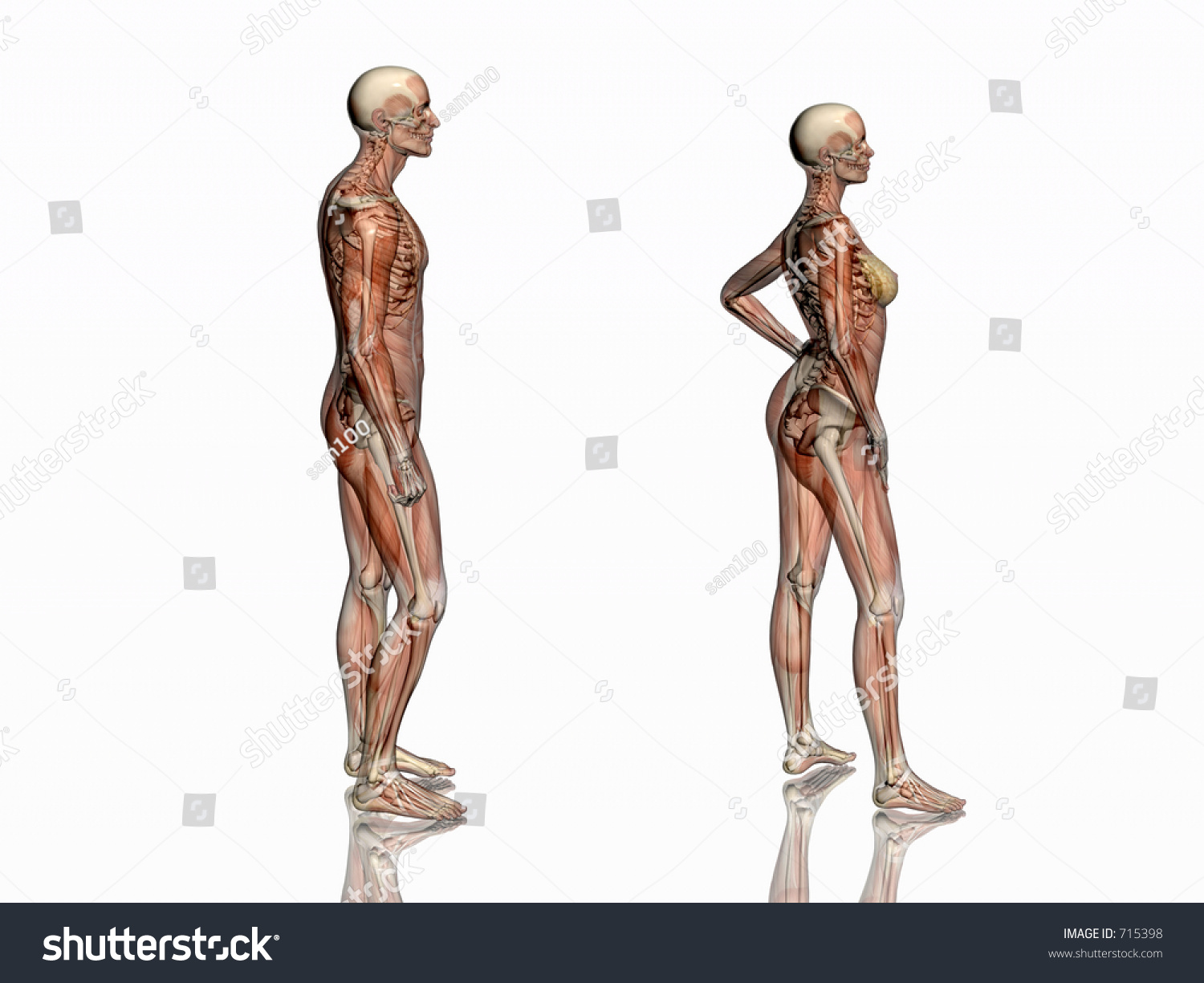 Anatomically Correct Medical Model Human Body Stock Illustration