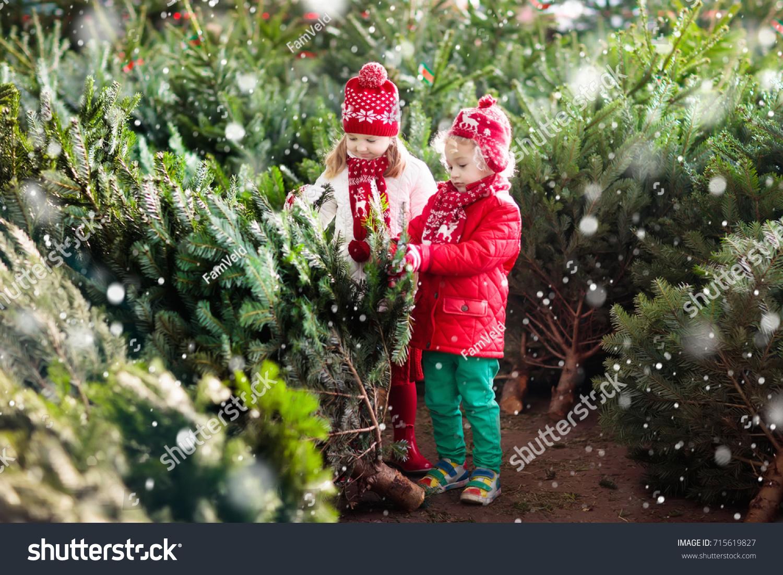 Family Selecting Christmas Tree Kids Choosing Stock Photo (Edit Now ...