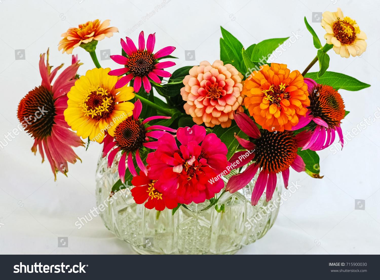 Colorful Flower Arrangement Cut Zenia Echinacea Stock Photo (100 ...