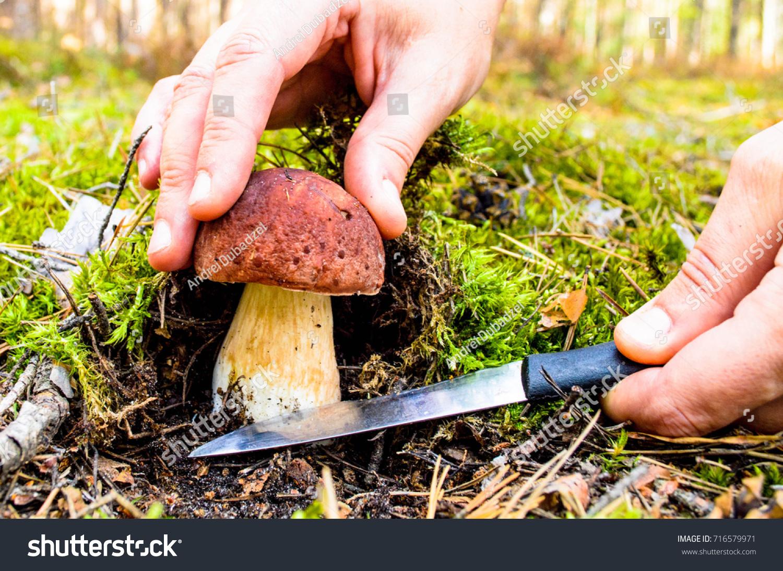 search mushrooms woods mushroom picker woman stock photo 716579971