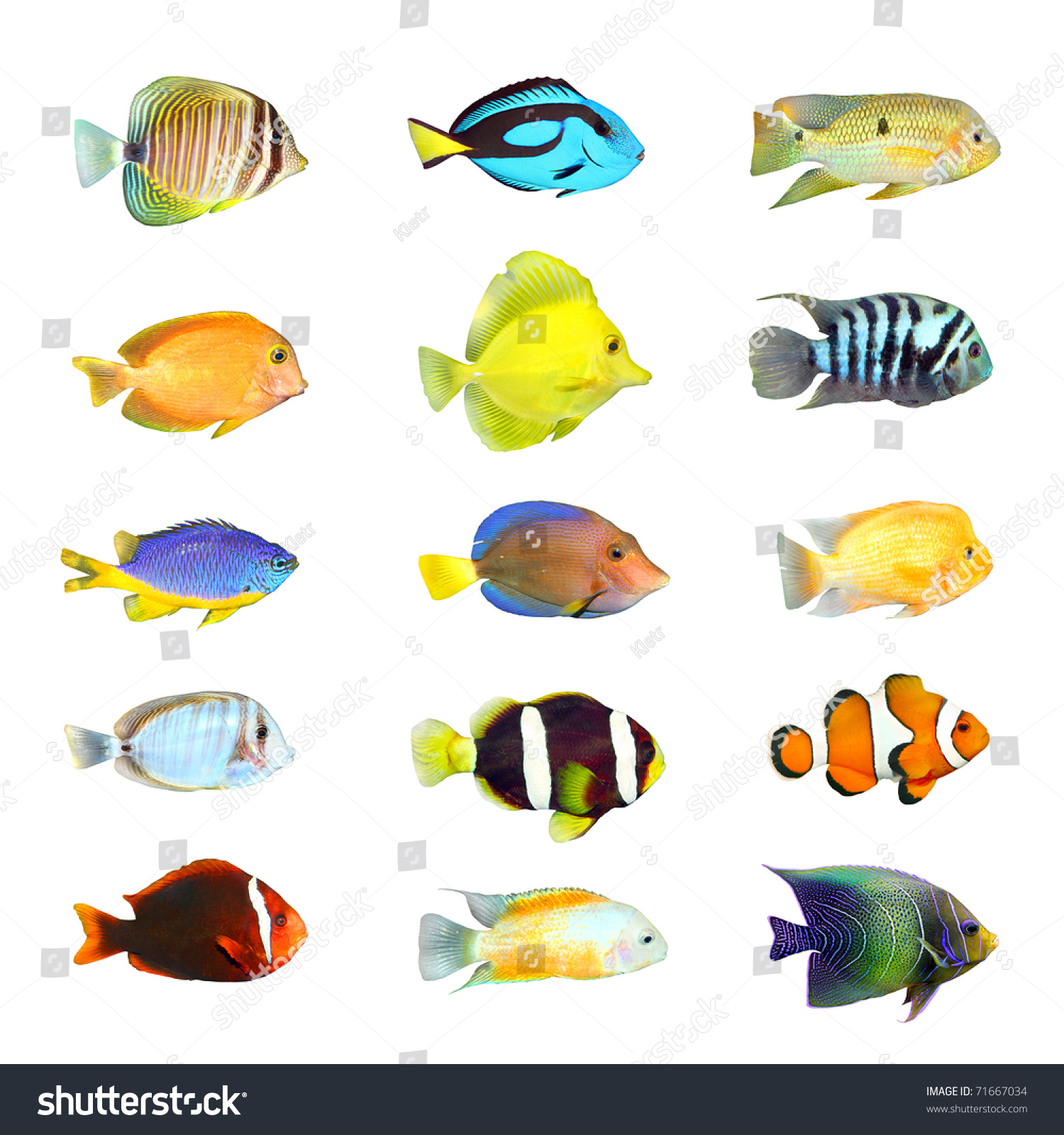Great collection tropical fish on white stock photo for Names of fish