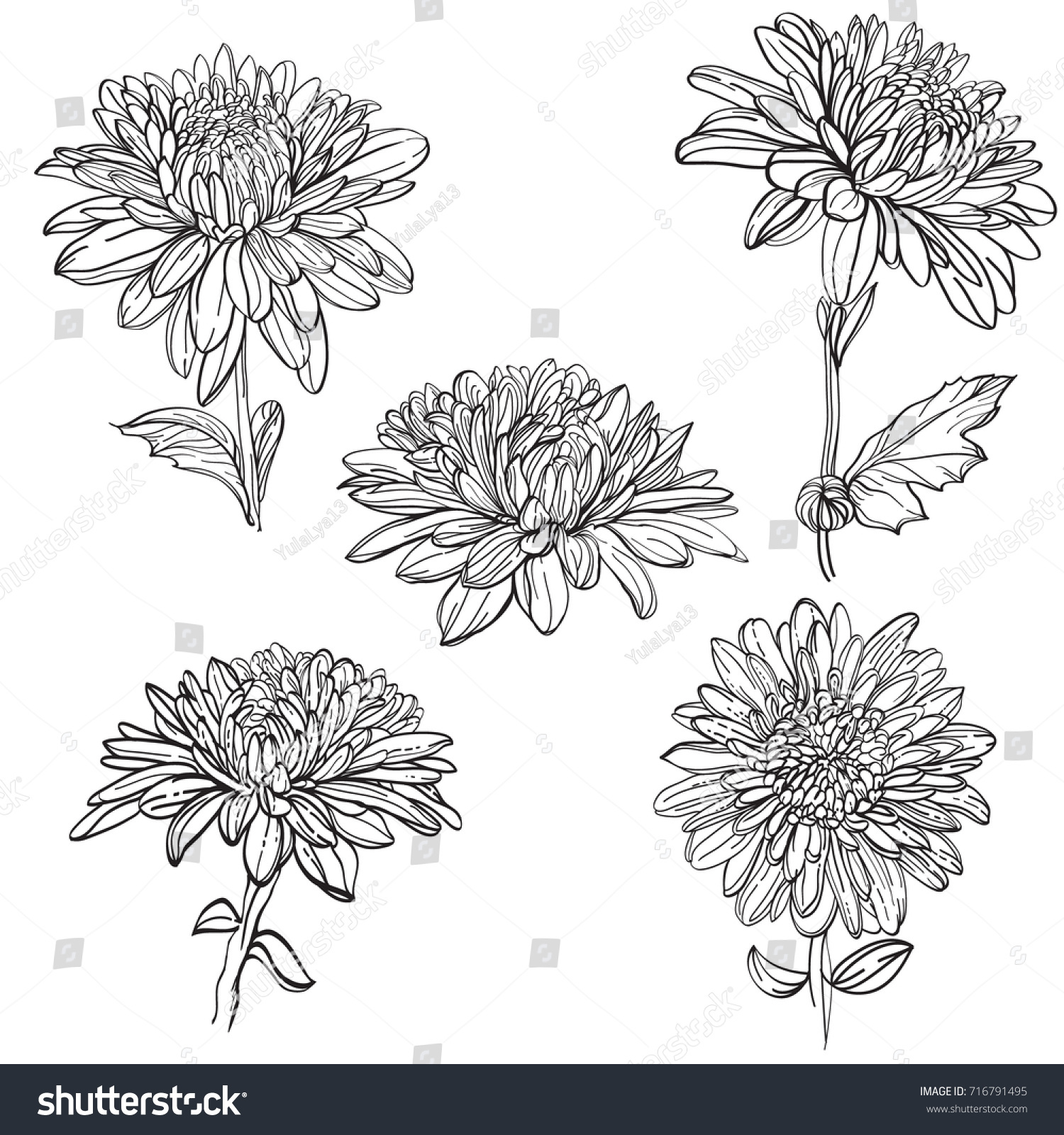 Set vector outline flowers chrysanthemum black stock vector set of vector outline flowers of chrysanthemum black and white line illustration of daisy flowers izmirmasajfo Choice Image