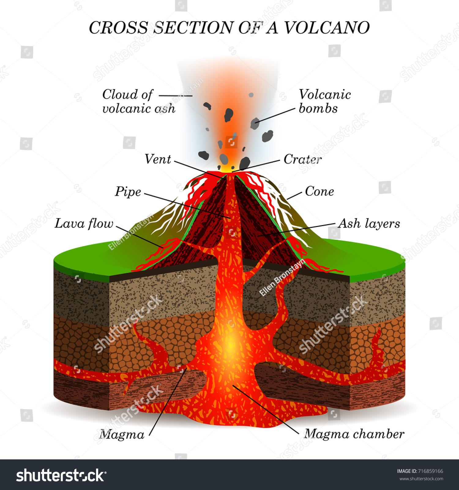 Volcano Igneous Eruption Cross Section Education Stock ...