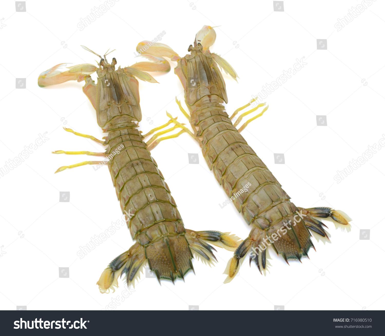 Fresh Mantis Shrimp Isolated On White Stock Photo (Edit Now ...