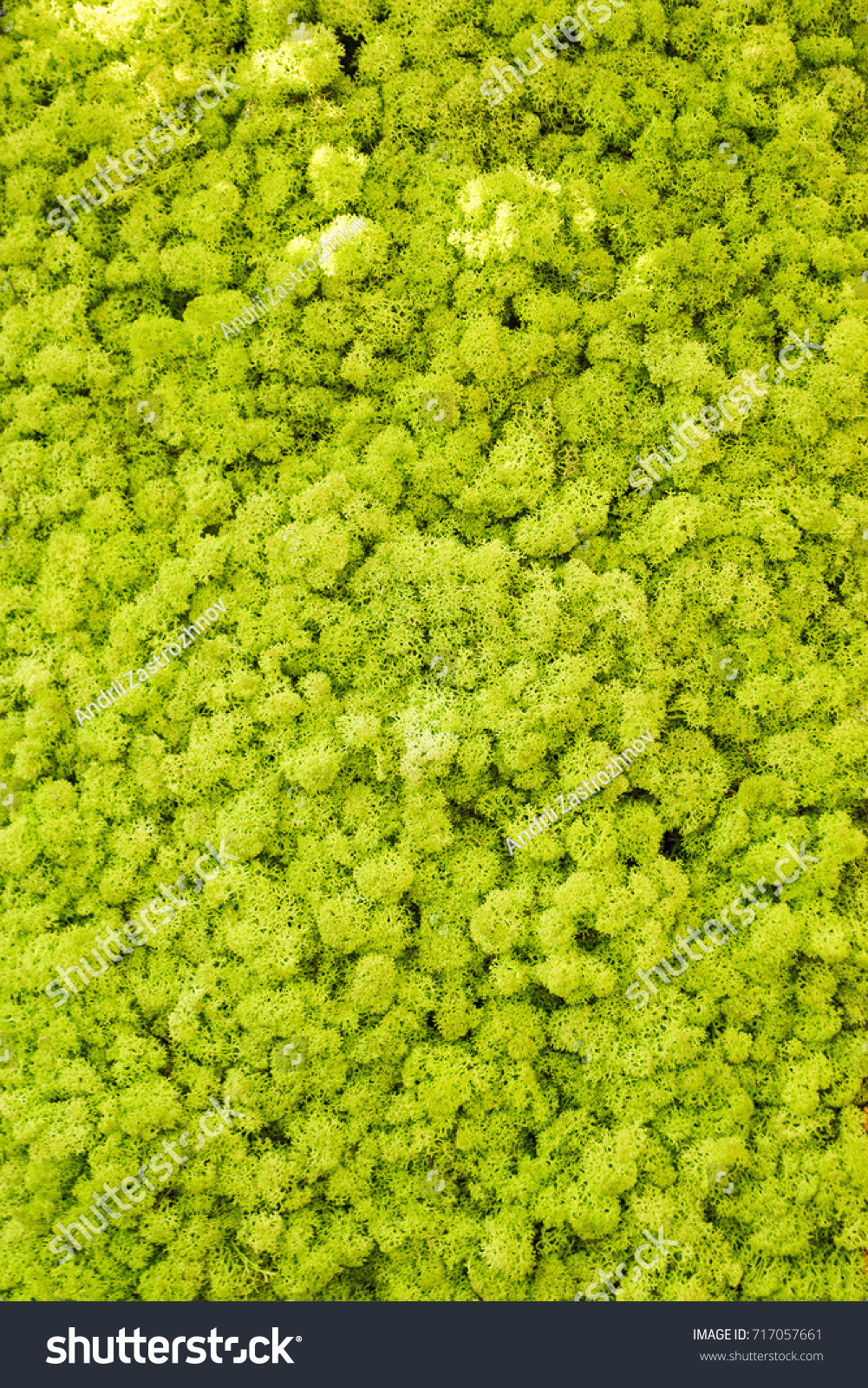 Reindeer Moss Wall Green Wall Decoration Stock Photo (Royalty Free ...