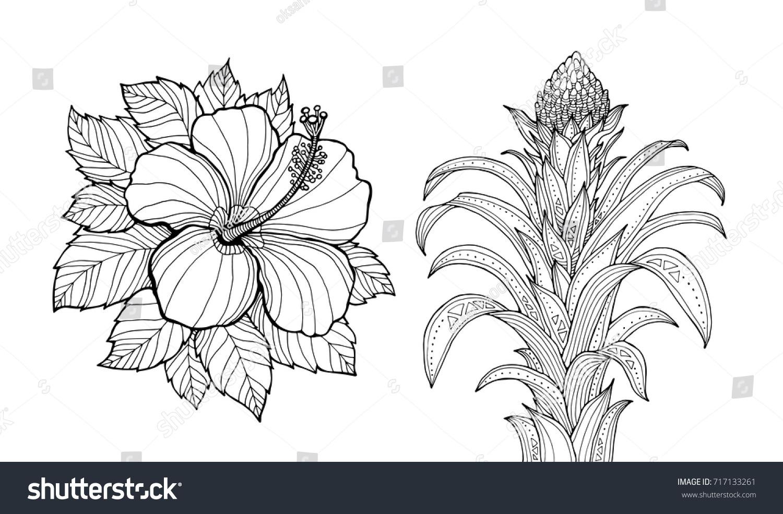 Hibiscus Flower Guzmania Tropical Plants Set Stock Vector Royalty