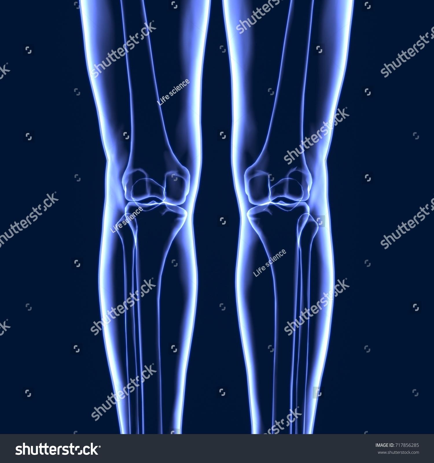 3 D Illustration Human Body Leg Bones Stockillustration 717856285