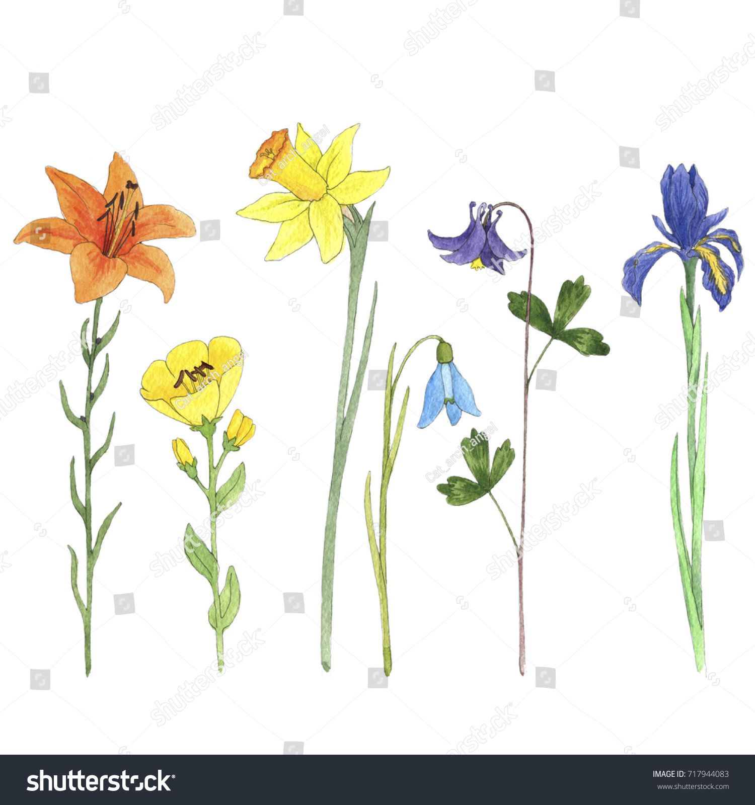 Set Watercolor Drawing Flowers Lily Iris Stock Illustration