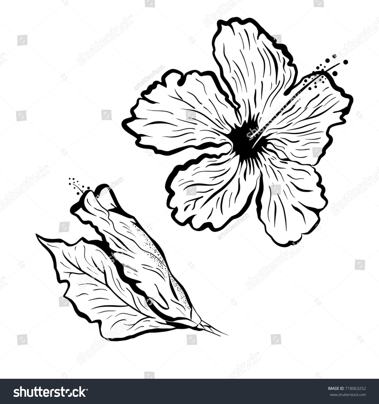 Hibiscus Flower Tattoo Style Black White Stock Vector Royalty Free