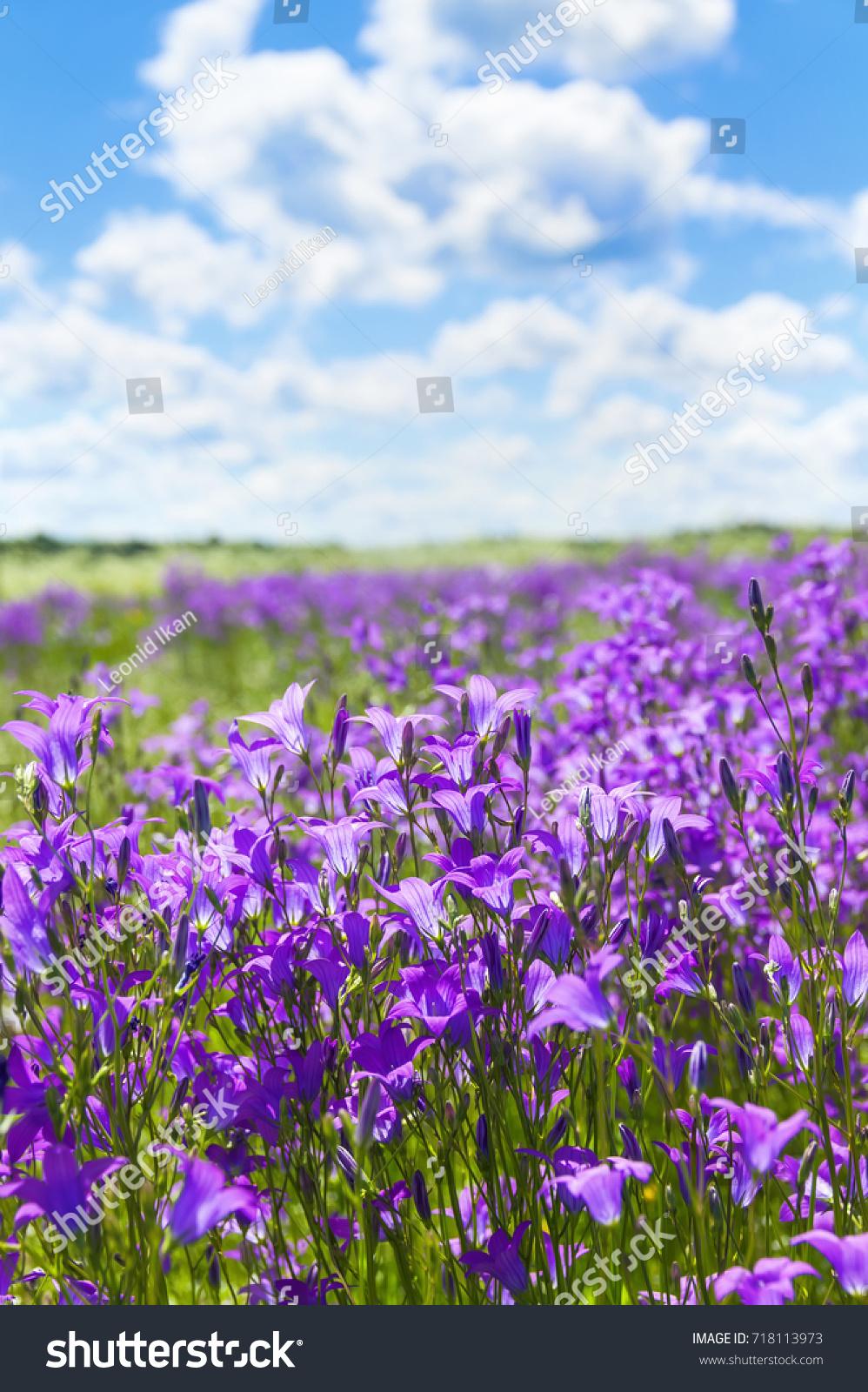Summer Bright Scenery Field Beautiful Flowers Stock Photo Edit Now
